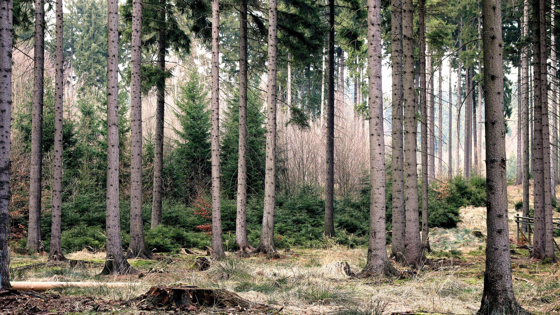 SAVED 14.6 MILLION TREES